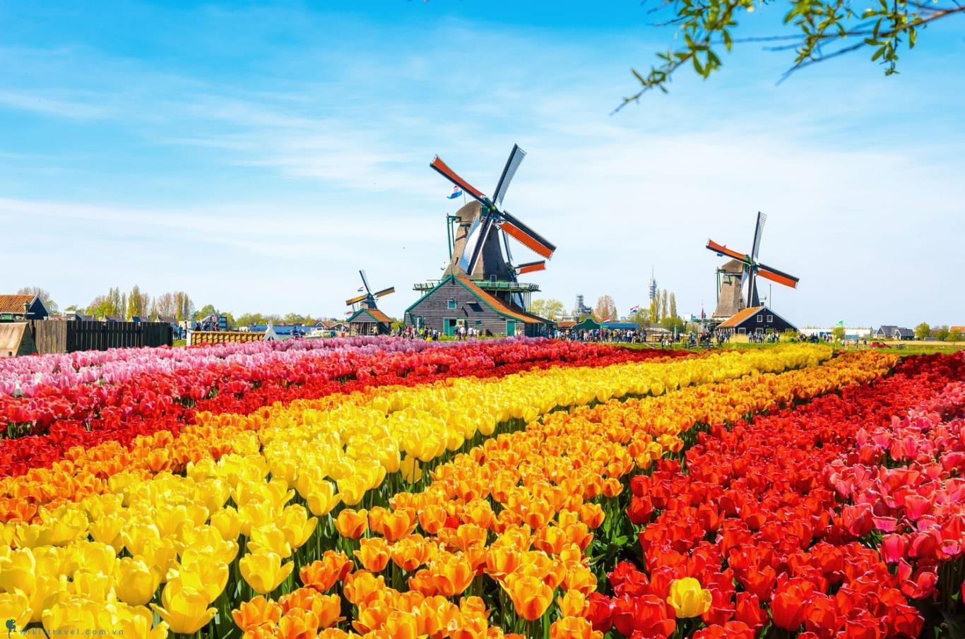 Dịch vụ chuyển phát nhanh đi Hà Lan giá rẻ của Sài Gòn Bay